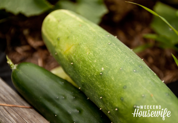 The Weekend Housewife - Our Vegetable Garden