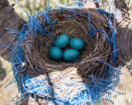 The Weekend Housewife - Robin's Nest in the Springtime